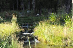 stream-with-grass1-500x332